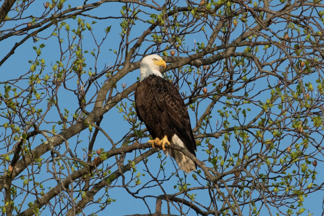 Eagles Conowingo Dam